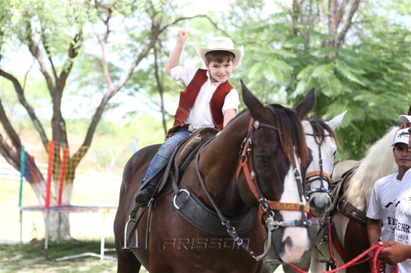 haras henri cavalos